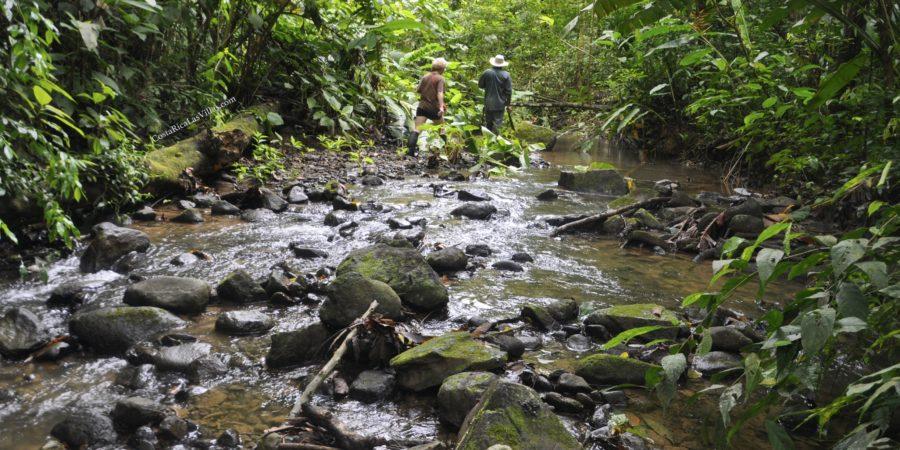 stream walk to waterfall